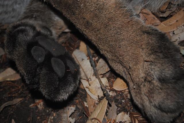 42M's paw pads